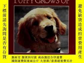 二手書博民逛書店A罕見Guide Dog Puppy Grows Up-導盲犬長大了Y346464 Arnold, Carol