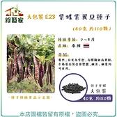 【綠藝家】大包裝E23.紫蝶紫翼豆種子40克 約110顆