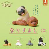 全套5款【日本正版】動物檔案系列 人氣裝扮篇 扭蛋 轉蛋 偽裝動物 公仔 Stand Stones - 710675