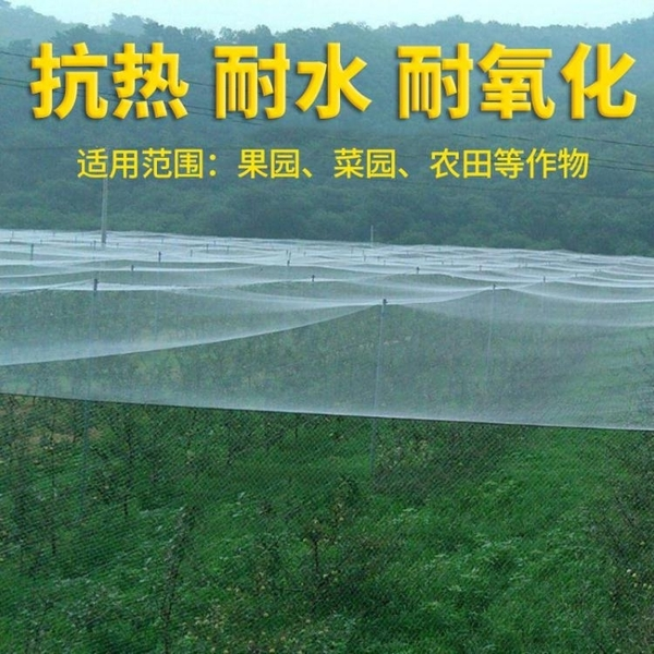 防鳥網 尼龍防鳥網天網果園果樹網稻谷櫻桃葡萄魚塘防護網水產養殖網 現貨快出