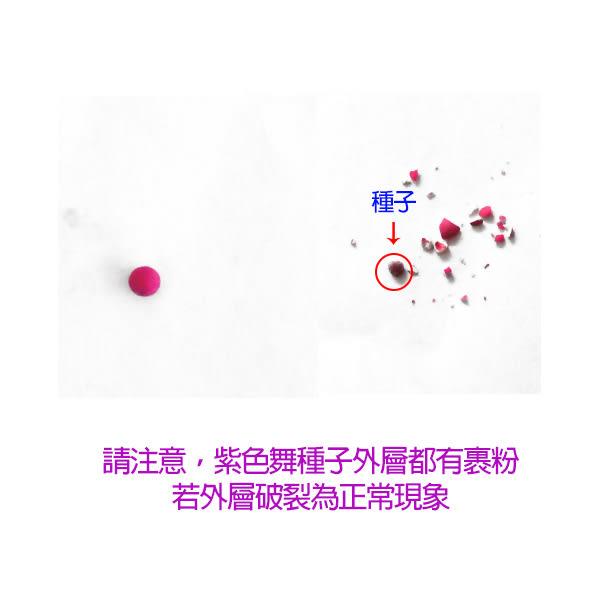 【綠藝家】B15.紫色舞大白菜種子1顆