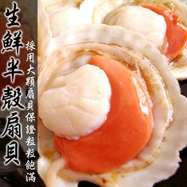 【屏聚美食】鮮美半殼扇貝500g(帶殼5-8粒)_第2件以上每件↘225元