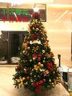 12呎聖誕樹(裸樹)360CM高  聖誕...