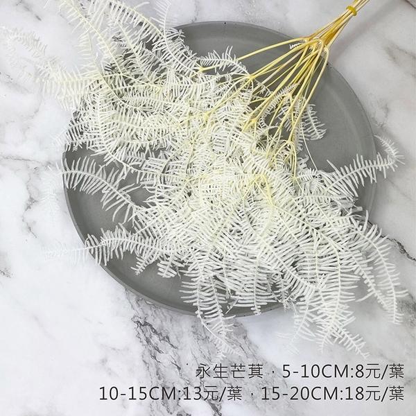 進口永生芒萁-乾燥花圈 乾燥花束 不凋花配草 拍照道具 室內擺飾 乾燥花材:5-10CM/1葉