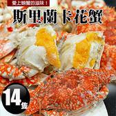 【屏聚美食】斯里蘭卡母花蟹14隻(200-250g/隻)超值免運組