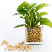 陶碳球 250g 淺黃色 負離子效果 無土栽培/水培/小盆栽/水族