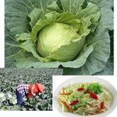 (雲林)國產高麗菜20公斤免運組-愛心助農