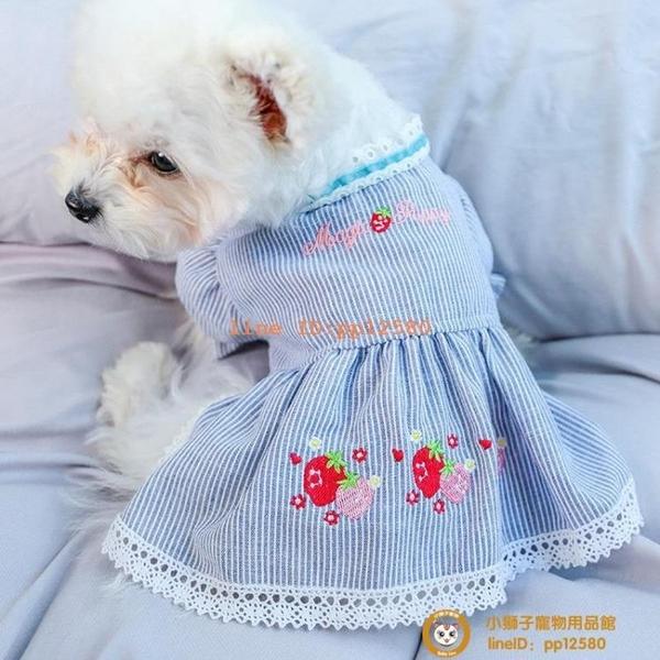 網美衣服春夏裝寵物裙子母狗泰迪比熊博美貴賓犬女狗小貓貓小型犬小狗狗【小獅子】