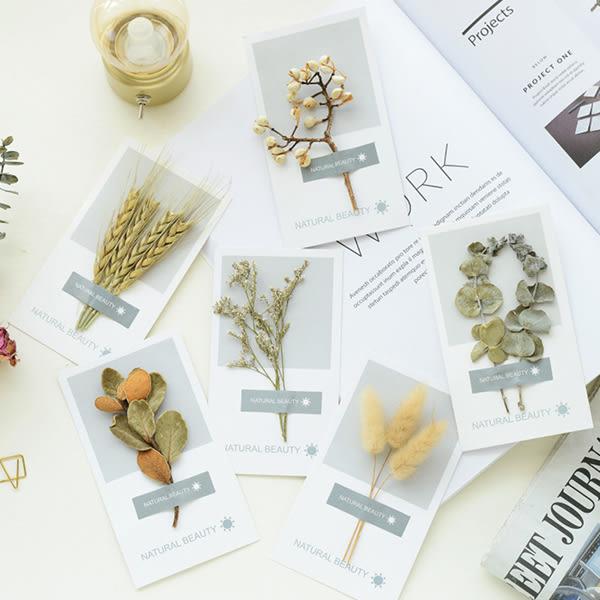 【BlueCat】自然美太陽風貼紙乾燥花明信片 卡片