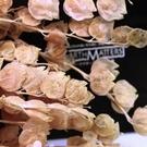 大地農園日本永生花,新品銀扇葉30320,3色,一份5克 (不裁減)