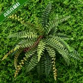 假花仿真波斯草蕨草假花植物牆腎蕨裝飾塑膠盆栽花盆景牆面綠植波斯葉JY【限時八折】