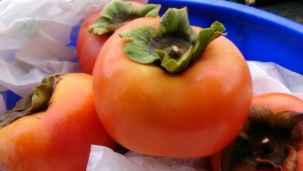 [南投]採果體驗-九芎坪果園(青梅、甜柿)