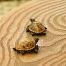 仿真彩色小烏龜擺件 花園裝飾品樹脂雕塑動...