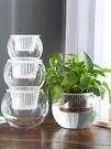 水培植物玻璃瓶透明玻璃花瓶容器綠蘿花盆圓球形魚缸水養小號器皿 滿天星