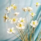 紫羅蘭蝴蝶花,乾花花束真花藝術,客廳裝飾品拍攝道具材料,手工永生花,一支裝