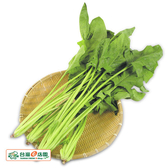 菠菜約250g★安全蔬菜