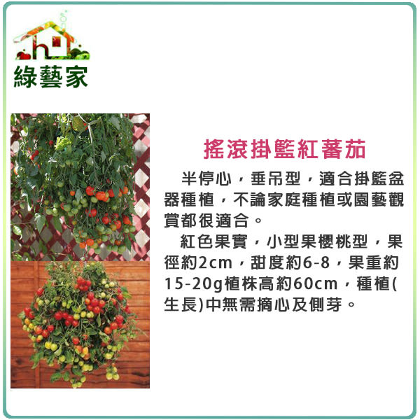 【綠藝家】大包裝G89.搖滾掛籃蕃茄種子20顆