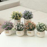 仿真綠植小盆栽盆景家居擺件書桌迷你裝飾假花套裝新品盆栽滿天星  無糖工作室