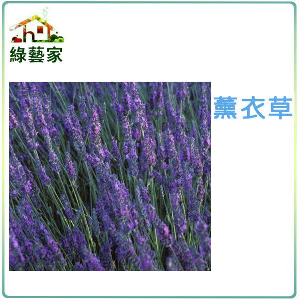 【綠藝家】大包裝K09.薰衣草種子2克(約1000顆)
