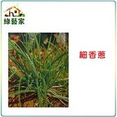 【綠藝家】大包裝D01.細香蔥種子13克(約4300顆)