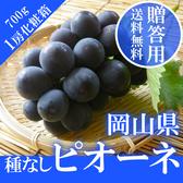 【果之蔬-全省免運費】日本岡山貓眼葡萄X1盒(原裝700g±10%/盒)