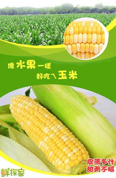鮮採家 玉米家族綜合蔬果(黃玉米+水果玉米+糯米玉米)
