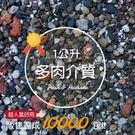 CARMO多肉植物專用土/多肉介質【C002001】