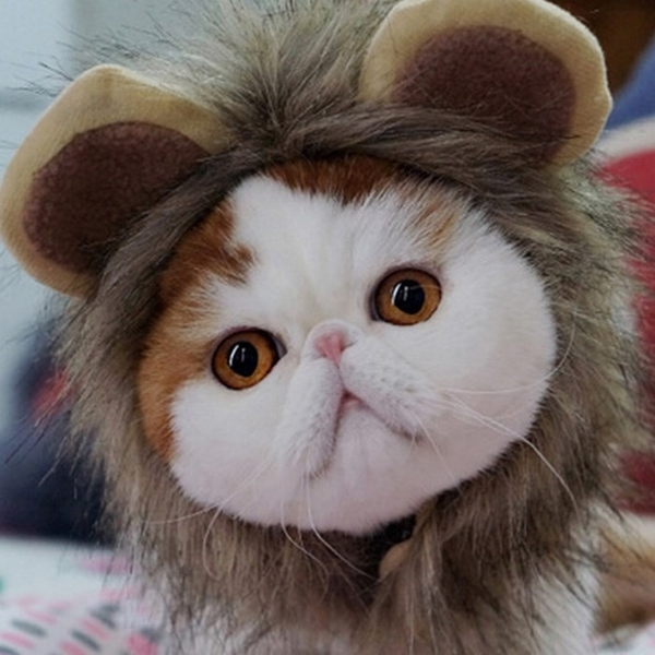 頭飾假發帽子寵物狗狗貓咪頭套 小狗貓貓獅子頭套【倪醬小舖】