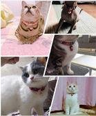 貓咪無聲鈴鐺貓項圈貓項錬貓圈