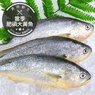 當季肥碩大黃魚(400g±10%/隻)(...