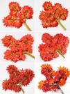 仿真紅楓葉樹枝假葉子樹葉室外工程造景植物假花藤條塑料花裝飾 3C優購