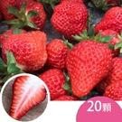 天藍果園-大湖草莓(20顆)含運組...