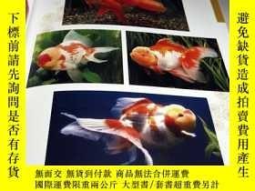 二手書博民逛書店Goldfish罕見Breeding book from Japan Japanese KINGYO[955]-日