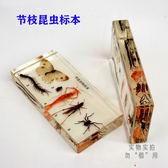 擺件禮物教學節枝肢昆蟲包埋人工琥珀教材蜘蛛標本認知玩具生物教學【全館限時88折】