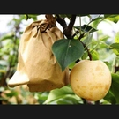 水果包裝袋樹上柚子袋套石榴透明桃子果實防蟲袋梨防鳥保護網袋 城市科技DF