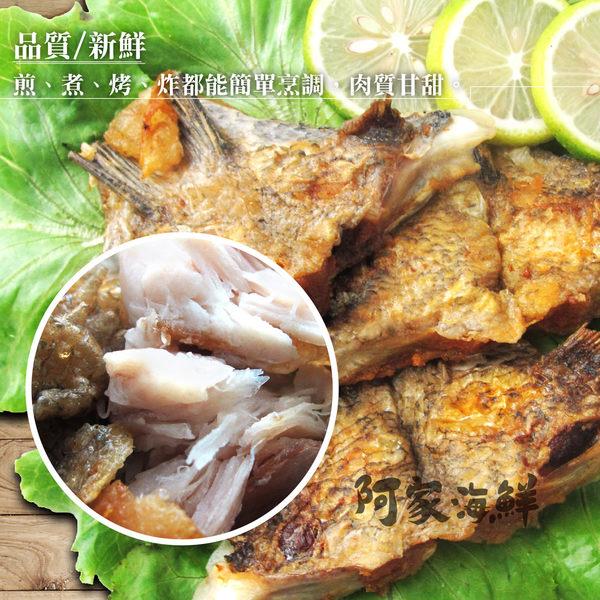 特級台灣鯛魚下巴 1000g±10%/包 ★同等活魚鮮度#炭烤#乾煎#紅燒#三杯油炸