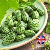 〔英國正品〕CARMO拇指西瓜種子 園藝種子(5顆)【FR0027】