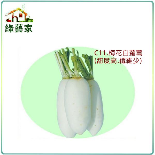 【綠藝家】C11.梅花白蘿蔔種子500顆
