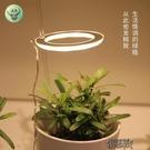 植物補光燈 植物補光燈全光譜led仿太陽燈上色室內家用usb食蟲植物【全館免運】