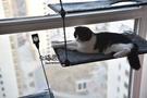 寵物吊床-宅貓醬貓咪吊床貓窩強承重節省空間全曬太陽之物美國k【快速出貨】