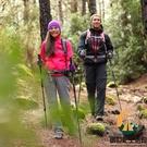 登山杖碳素超輕便攜伸縮戶外登山徒步爬山裝備碳纖維手杖【創世紀生活館】