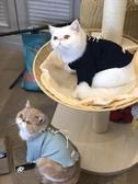 貓咪衣服防掉毛冬裝保暖貓貓寵物貓抖音同款可愛秋冬季貓衣服 街頭布衣