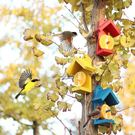 多彩水果喂鳥亭觀鳥喂鳥餵食器戶外觀鳥園藝...