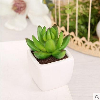 F0760 小清新辦公室桌面白擺設 多肉植物盆栽 迷你組合小綠植盆景(1盆)