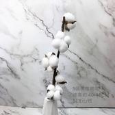 進口乾燥天然 5頭帶枝棉花- 乾燥花束 不凋花 拍照道具 室內擺飾 裝飾插花鄉村風-118元/枝