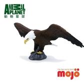《MOJO FUN動物模型》動物星球頻道獨家授權 - 美國老鷹