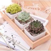 ⓒ簡約木盒+全白陶瓷盆套組(3盆入) 多肉花盆 盆栽【BI08001】