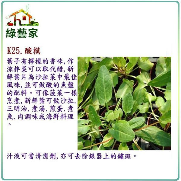 【綠藝家】K25.酸模種子300顆