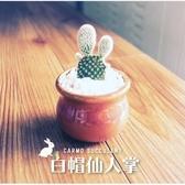 〔爆款兔耳〕CARMO白帽仙人掌兔耳朵成株(1吋) 新手入門【Z0052】