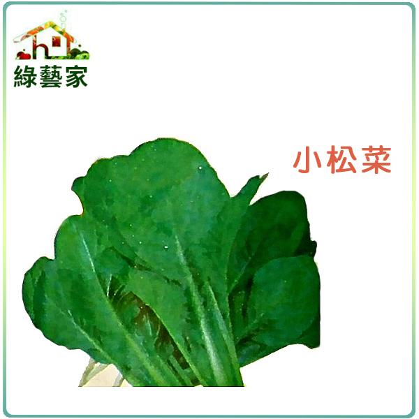 【綠藝家】A25.小松菜種子350顆 (日本時次郎)